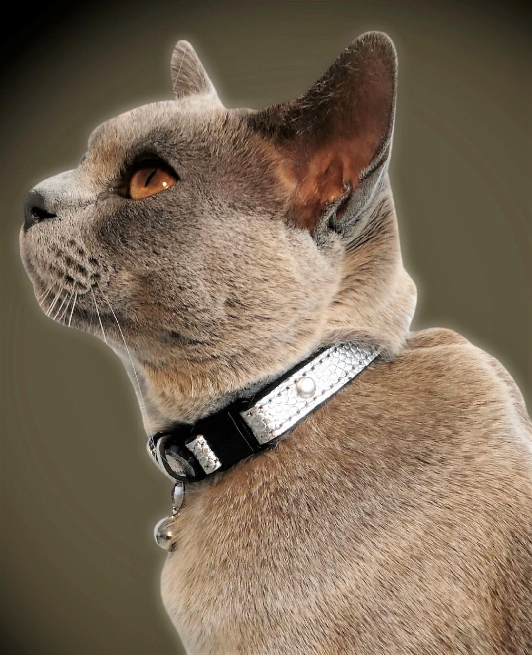 Breakaway Cat Collars