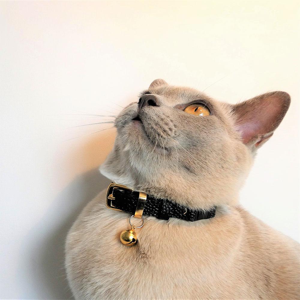 leather cat collars